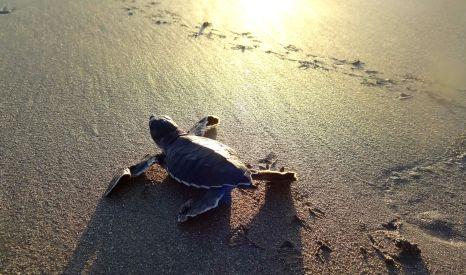 Making a run for it - Playa Hermosa, Nicaragua
