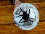 Picked up a tarantula on the road